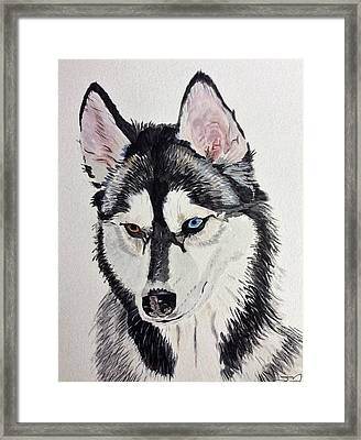 Almost Wild Framed Print