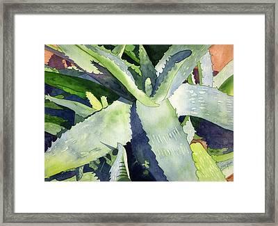 Aloe Framed Print by Eunice Olson
