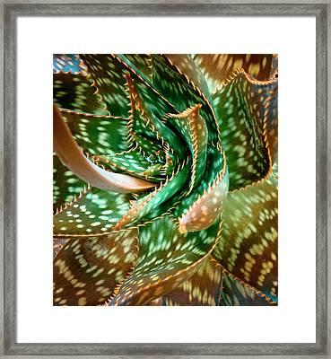 Aloe Saponaria, Soap Aloe Maculata Framed Print by Frank Tschakert