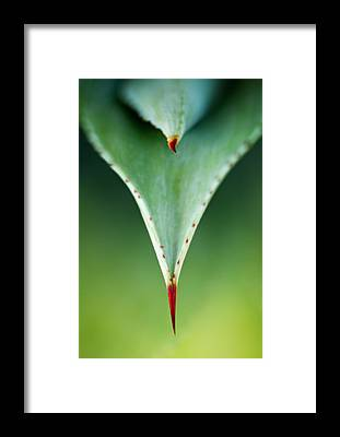 Thorns Framed Prints