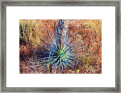 Aloe Vera In Meadow Framed Print by Mariola Bitner