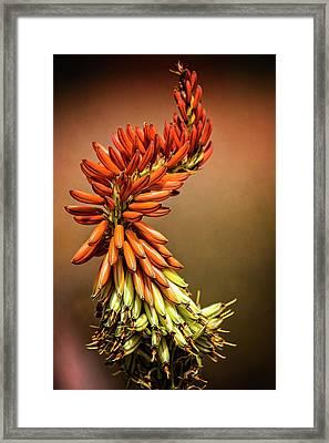 Framed Print featuring the photograph Aloe Vera Twist  by Saija Lehtonen