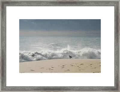 Alone - Jersey Shore Framed Print