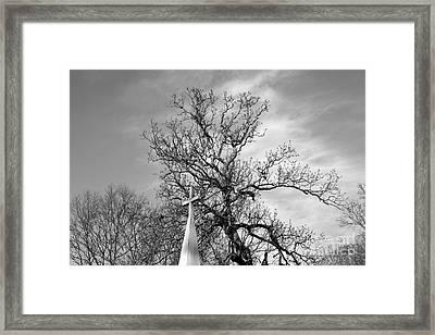 Alone Framed Print by Amanda Barcon