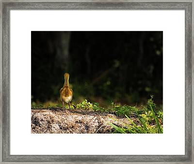 Alone And Searching Framed Print