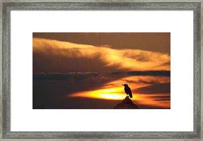 Alone At Dawn Framed Print by Jack Norton