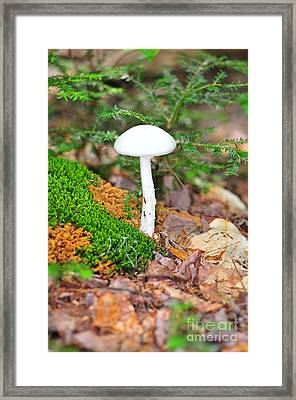 Alone Framed Print by Catherine Reusch Daley