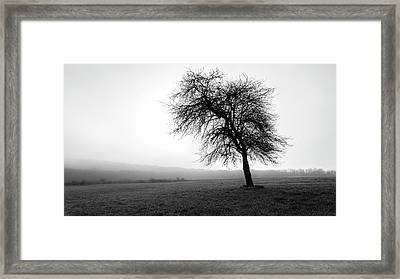 Alone In A Field Framed Print by Andrew Pacheco
