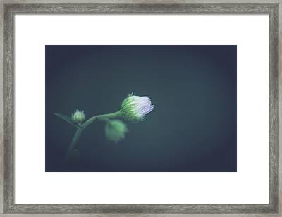 Framed Print featuring the photograph Alone In Dreams by Shane Holsclaw
