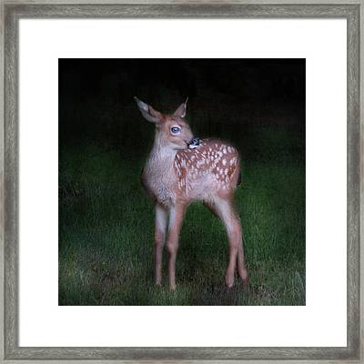 Framed Print featuring the photograph Alone In The Night by Sally Banfill