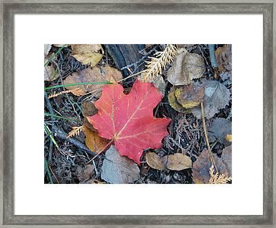 Alone In The Woods Framed Print by Kelly Mezzapelle