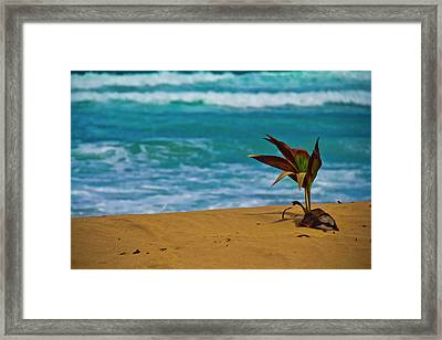 Alone On The Beach Framed Print