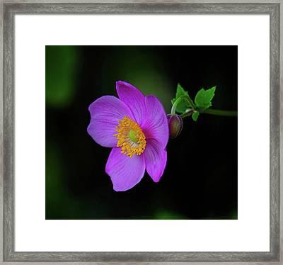 Anenome Purple Framed Print