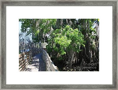 Along Florida Boardwalk Framed Print by Carol Groenen