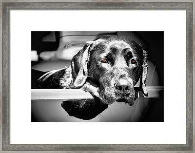 Along For The Ride Framed Print by Karen M Scovill