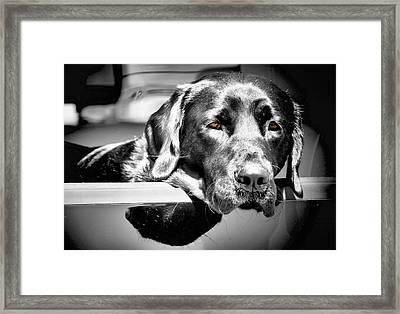 Along For The Ride Framed Print by Karen M Scovill