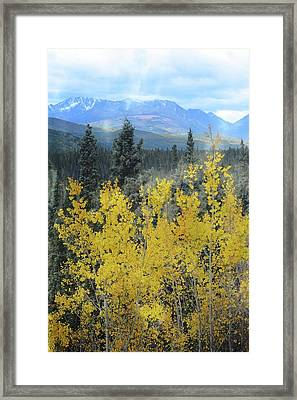 Along The Alaskan Highway  Framed Print by Marty Koch