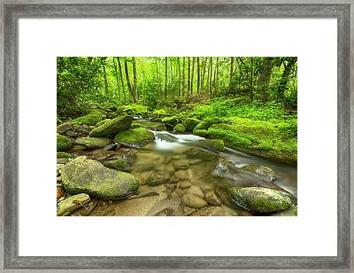 Along The Banks Of The Roaring Fork Framed Print