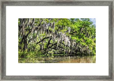 Along The Bayou Framed Print by Andy Crawford
