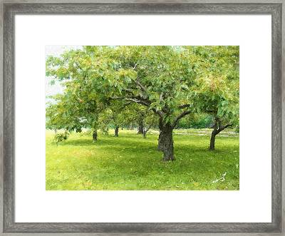 Along The Charles Framed Print by Eddie Durrett