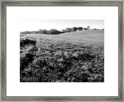 Along The Dog Path At Tufts Framed Print