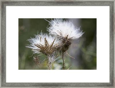 Along The Meadow Trail Framed Print by Andrew Pacheco