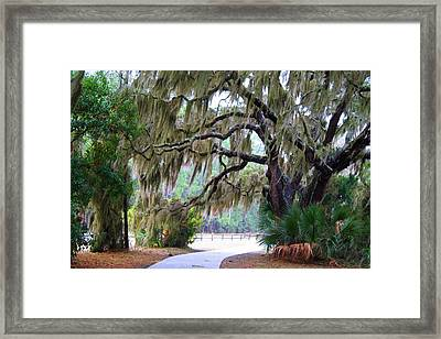 Framed Print featuring the photograph Along The Path by Kathryn Meyer