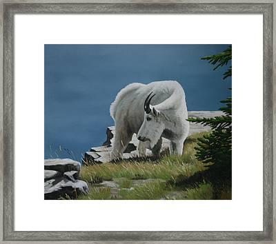 Along The Ridge Framed Print by Jennifer Batey