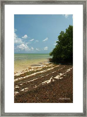Along The Shore Of Annes Beach Islamorada Florida Framed Print by Michelle Wiarda