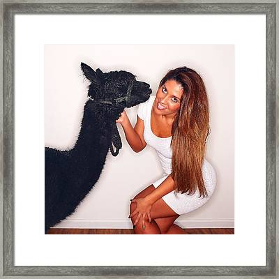 Alpaca Emily And Breanna Framed Print