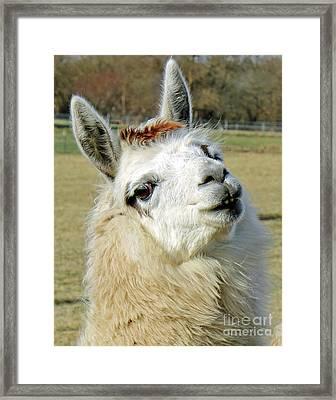 Alpaca Portrait Framed Print
