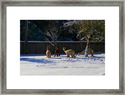 Alpacas In The Snow Framed Print