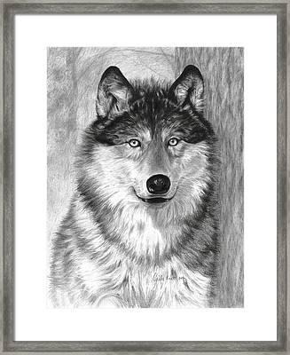 Alpha Framed Print by Carla Kurt
