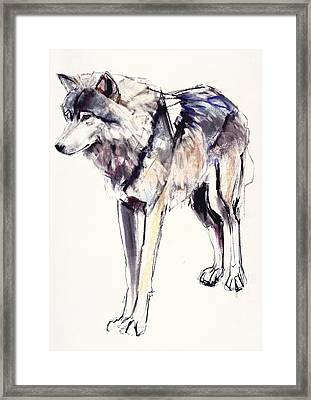 Alpha Framed Print by Mark Adlington