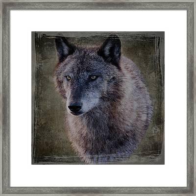 Alpha Wolf Portrait Framed Print