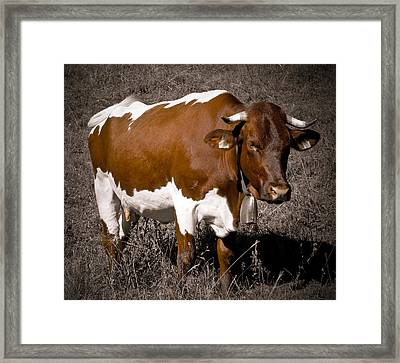 Alpine Cow Framed Print by Frank Tschakert