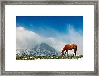 Alpine Equine Framed Print by Todd Klassy