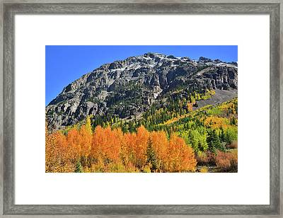 Framed Print featuring the photograph Alpine Loop Road Aspens by Ray Mathis