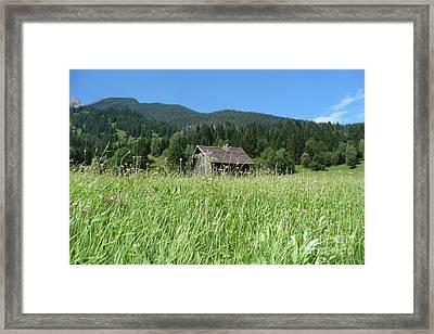 Alpine Meadow  Framed Print by Carol Groenen