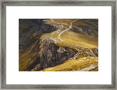 Alpine Pastures Framed Print by Mihai Ian Nedelcu