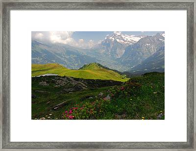 Alpine Roses In Foreground Framed Print