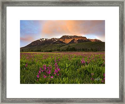 Alpine Shooting Stars Framed Print by Leland D Howard