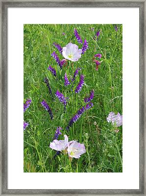 Alpine Vetch And Primroses Framed Print by Robyn Stacey