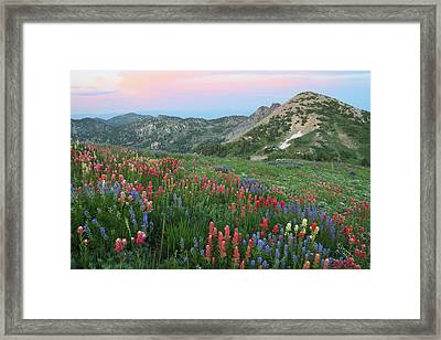Alpine Wildflowers And View At Sunset Framed Print by Brett Pelletier