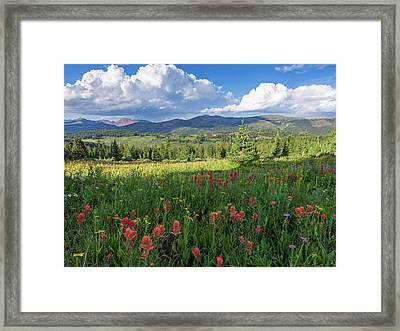 Alpine Wildflowers In A High Meadow In The Rocky Mountains Of Co Framed Print