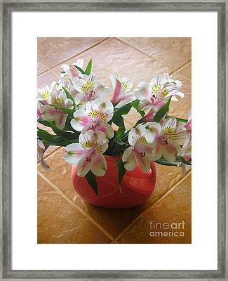 Alstroemerias In The Light Of Day Framed Print by Lucyna A M Green