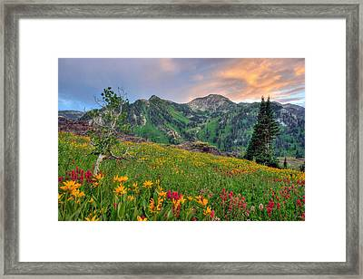 Alta Wildflowers And Sunset Framed Print