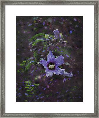 Happy Althea Framed Print by Frank Maxwell