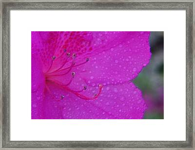 Althea Framed Print by Priscilla Richardson