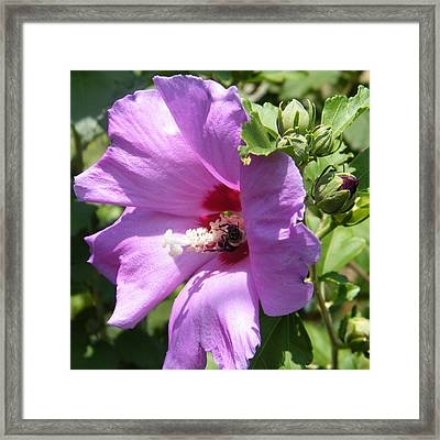 Althea Framed Print by Virginia Potter